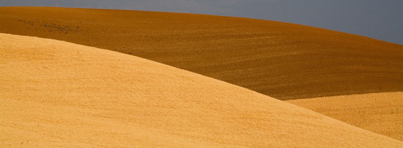 Whete Fields, Palouse Region, near Colfax, WA