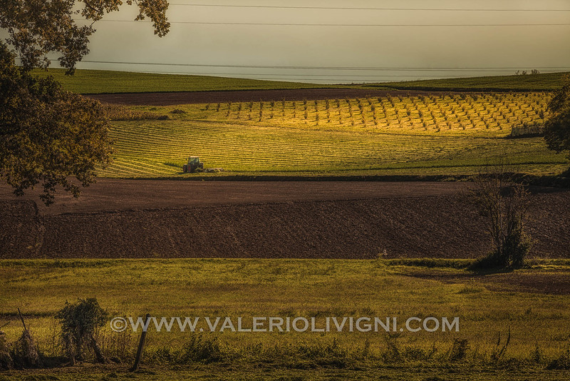 Monferrato - Vineyard landscape