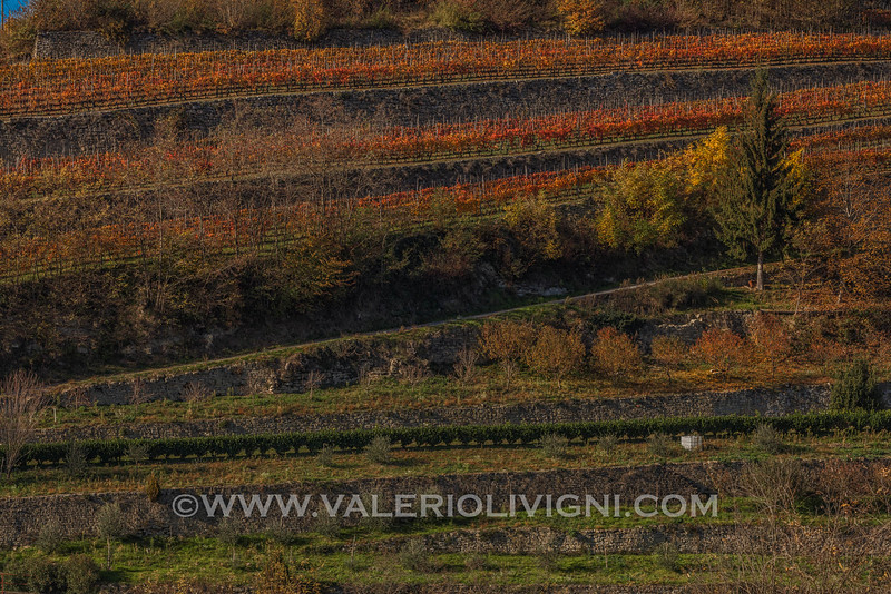 Langhe - Fall vineyard terraces at Cortemilia
