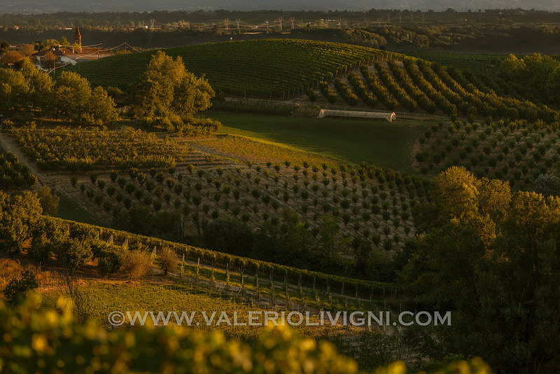 Langhe -  Hazels and vineyards<br /> © UNESCO & Valerio Li Vigni - Published by UNESCO World Heritage