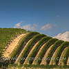 Roero -  Vineyard landscape<br /> © UNESCO & Valerio Li Vigni - Published by UNESCO World Heritage