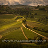 Langhe -  Vineyard landscape<br /> © UNESCO & Valerio Li Vigni - Published by UNESCO World Heritage