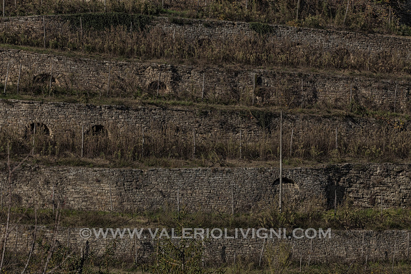 Langhe - Vineyard terraces at Cortemilia
