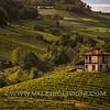 Langhe -  Vineyards of Barolo<br /> © UNESCO & Valerio Li Vigni - Published by UNESCO World Heritage