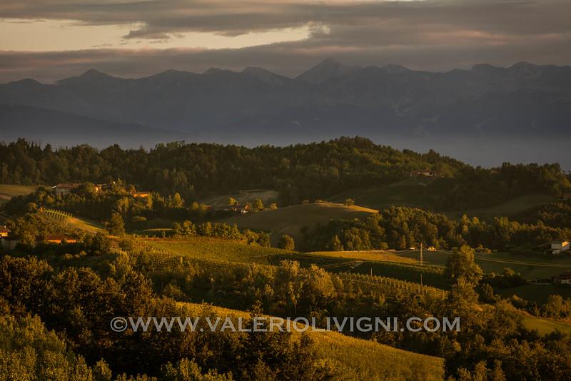 Langhe -  Vineyard landscape