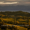 Langhe -  Vineyard landscape