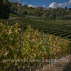 Roero -  Vineyard landscape at Guarene<br /> © UNESCO & Valerio Li Vigni - Published by UNESCO World Heritage