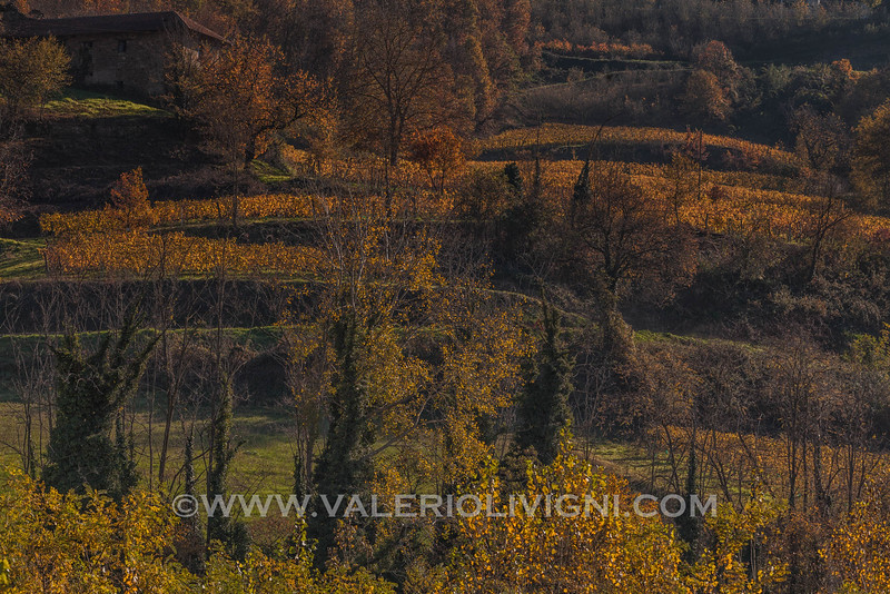 Langhe - Fall vineyard terraces at Cortemilia