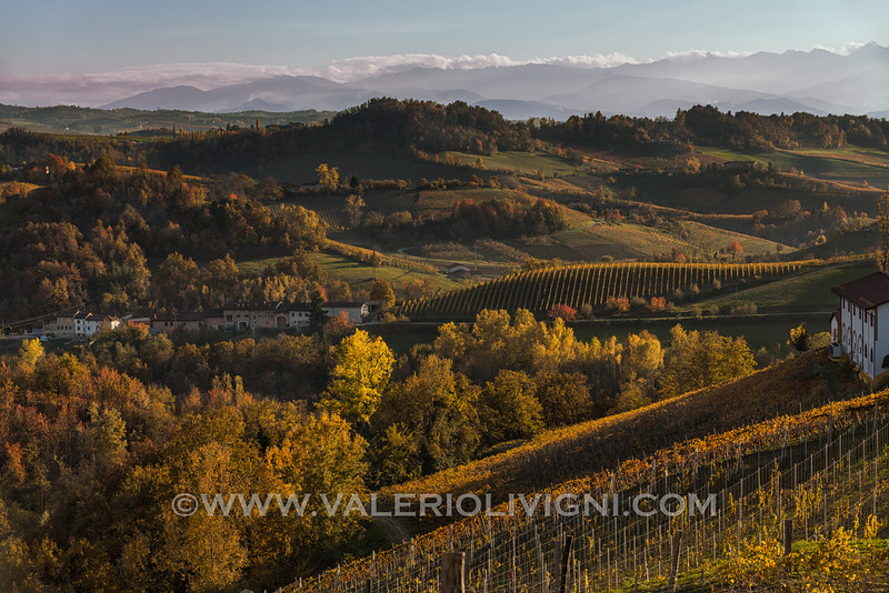 Langhe - Fall vineyard landscape in Monforte d'Alba