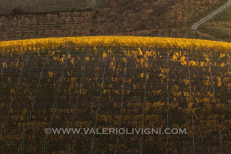 Langhe - Fall vineyard landscape at Annunziata, La Morra