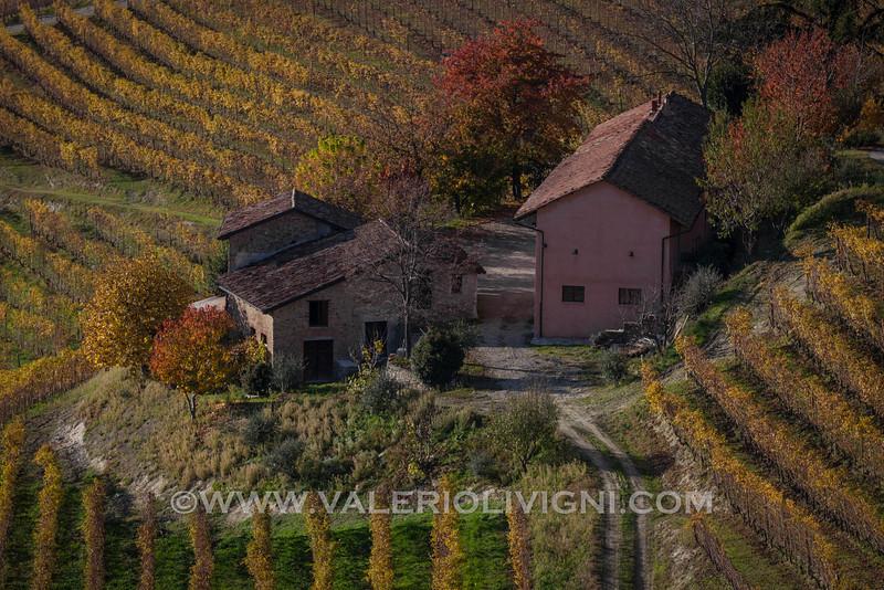 Langhe - Fall vineyard landscape