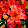 Flowers at Bellagio Botanical Gardens in Las Vegas 16