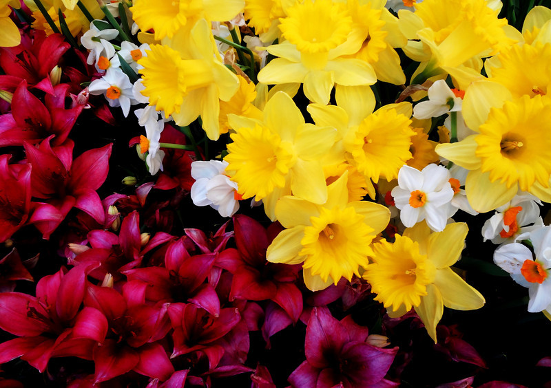 Flowers at Bellagio Botanical Gardens in Las Vegas 17