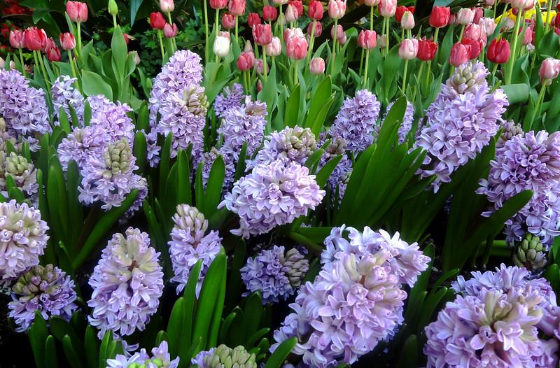 Flowers at Bellagio Botanical Gardens in Las Vegas 10