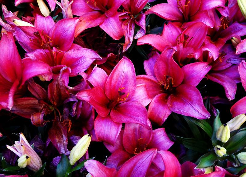 Flowers at Bellagio Botanical Gardens in Las Vegas 18