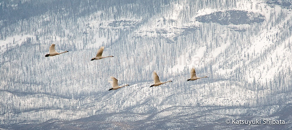 Blue Winter #1 Summer Lake Wildlife Refuge March 18, 2006