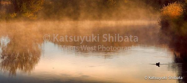 Morning Mist #2 Malheur National Wildlife Refuge Southeastern Oregon October 8, 2006