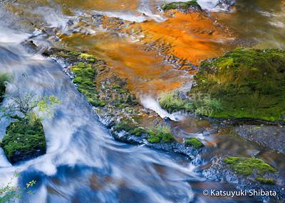Stillness and Flow North Fork of Middle Fork Willamette River October 26, 2008