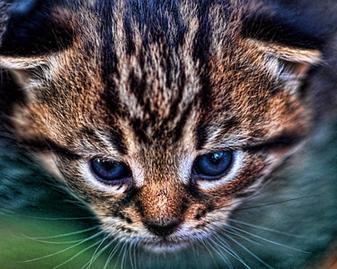 A Tale of two kitties http://rick-sellick.smugmug.com/Nature/Animals-Insects-Reptiles/A-Tale-Of-Two-Kitties/11897806_J5469#855816263_QuyGe