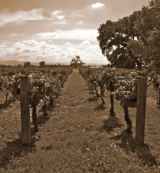 Vineyard, Los Ranchos de Albuquerque