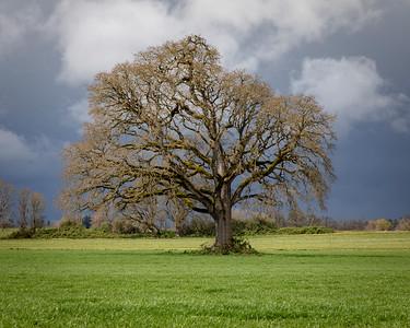 Tree 1-1