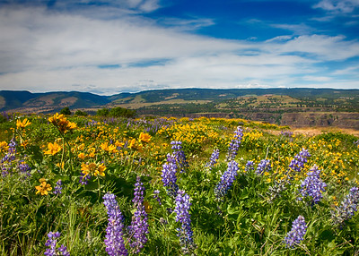 Rowena Oregon Flowers