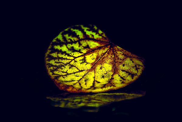 Leaf Art and Portraits