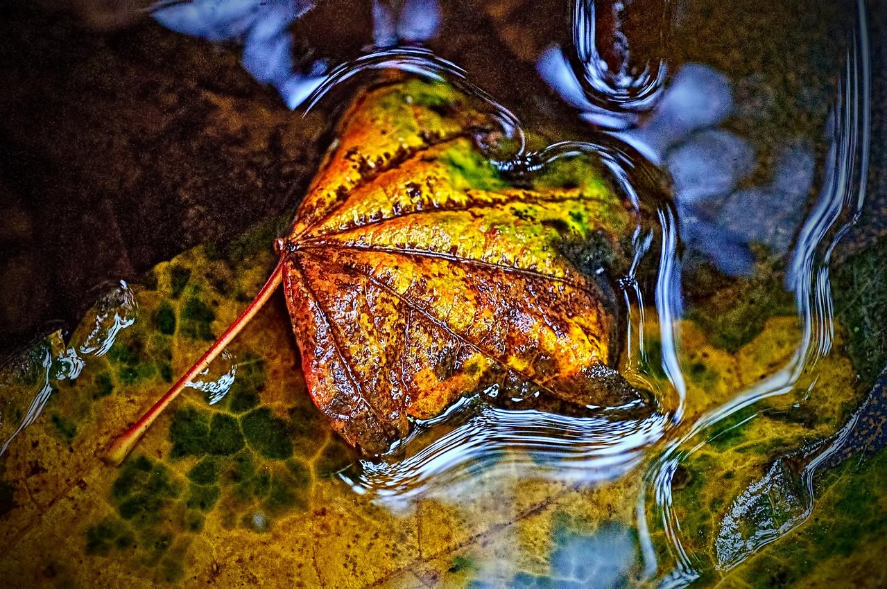 Birdbath Leaf_edited-2