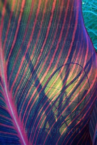 Striped_Leaf_054