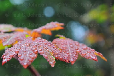 Drops_On_Leaves_054