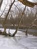 Huron River Trees in the Nichols Arboretum Ann Arbor 01/10/2011