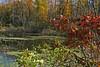 Cavanaugh Lake Road Swamp 10/10/10