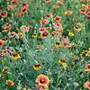 Flower Boquet<br /> Zeiss 50 MP f2