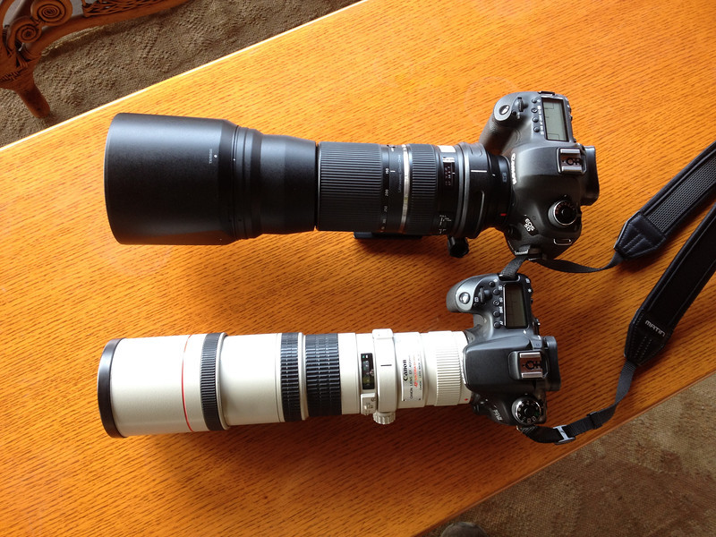 "CANON VS TAMRON SHOOTOUT!<br /> <br /> Tamron 150-600 zoom on the upper photo and the Canon 400 prime.<br /> <br /> IS THE TAMRON 150-600mm F5-6.3 A GOOD ALTERNATIVE?<br /> One of the things that may dwell in one's mind is whether this Tamron can replace either the Canon 400 f5.6 prime or the Canon 100-400, if one was looking for a lighter, handholdable all-in-one option for wildlife safaris (birds, animals even sceneries). <br /> <br /> The rationale is that if this Tamron zoom is at least close, as good or better than the two Canons at 400 in terms of AF ability, IQ and reliability, and with an extra bonus of a 500 and a 600 focal lengths, it would be an ideal all-in-one lens in the camera bag.<br /> <br /> NOTE: BEAR IN MIND THAT ALL TEST SHOTS WERE TAKEN IN RAW AT NEUTRAL SETTING WITH NO SHARPENING.  THEY WERE PROCESSED INTO JPGS FOR EASY DOWNLOADING. NO PP.<br /> <br /> EXIF ARE EMBEDDED IN THE FILES. TECHNICAL INFORMATION CAN ALSO BE CHECKED BY CLICKING ON THE ""i"" button with a mouse over on the image.<br /> <br /> Picture taken with an Apple iPhone 4s"