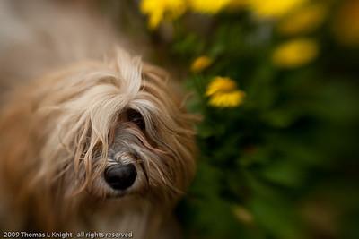 Jesie in the garden
