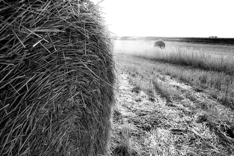 North Dakota Hay Harvest