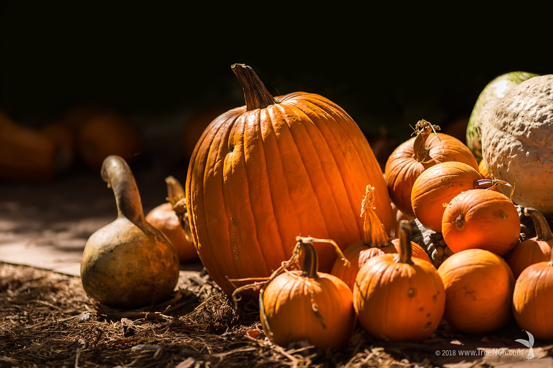 Dramatic pumpkins