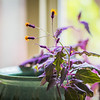 Blooming purple passion, still life photography