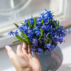 Squill bouquet on the window 04