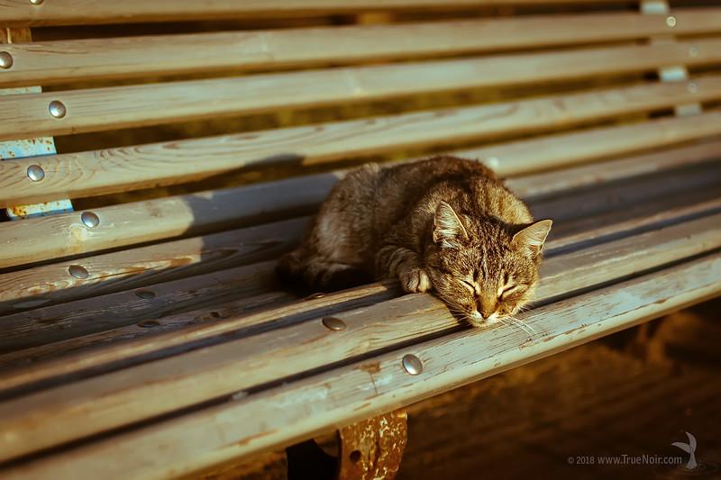 Last Warm Days, animal photography