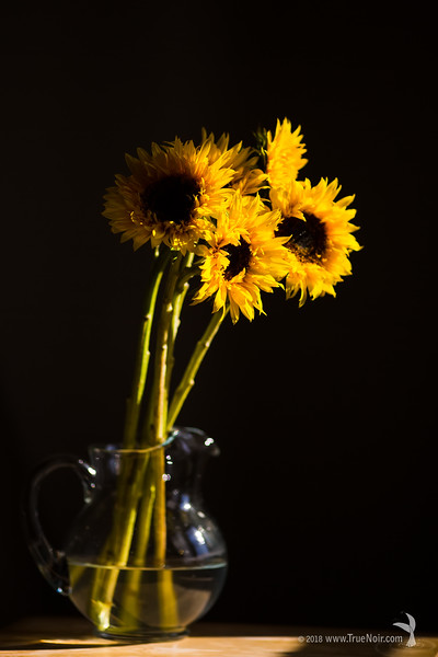 Dramatic sunflower bouquet, still life photography