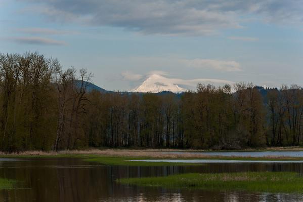 Scenic Landscape, Tip of Mt Hood