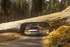 drive through redwood-2