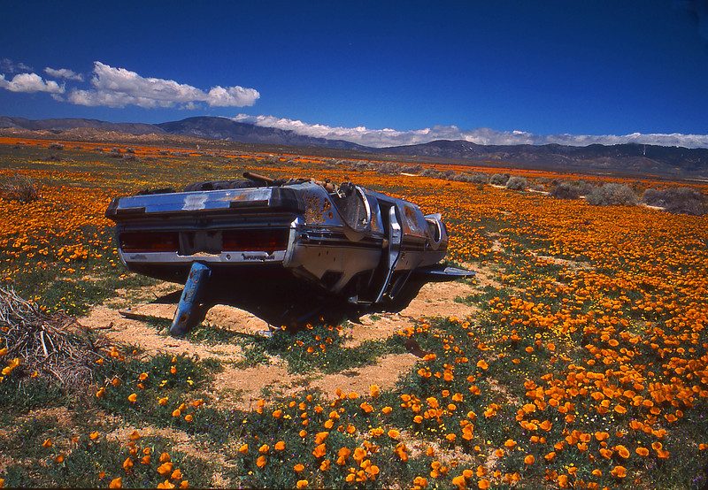 poppies and wreck