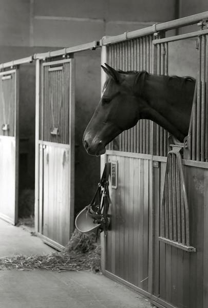 Linda de paardenarts / Linda the horse vet
