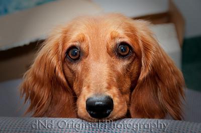 18 Linda's Dog