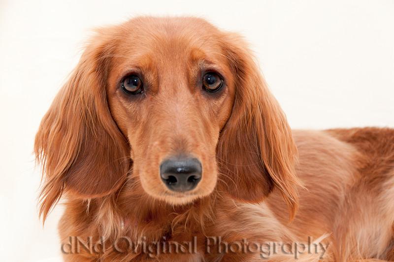 21 Linda's Dog