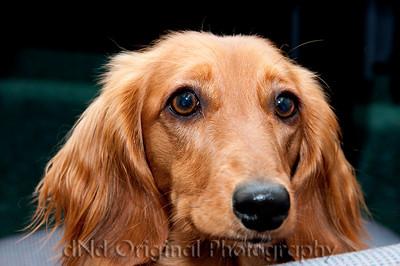 19 Linda's Dog