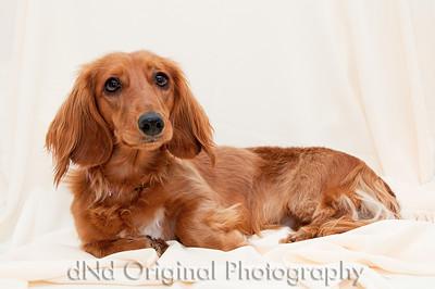 20 Linda's Dog