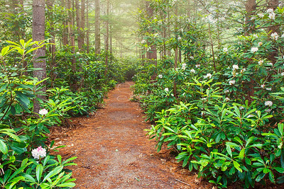 Rhododendron State Park Path